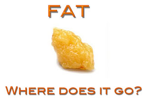 You Asked: Where Does the Fat Go?