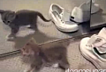 Cute Alert: Kitten Discovers Self In Mirror