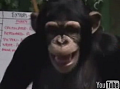 Mikey The Chimp Blows Raspberries