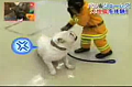 Chimp Helps Fire Department