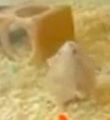 This Hamster Will Make You Happy