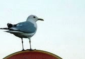 Bird Stands on Anti-Bird Sign