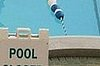Poo in Pool