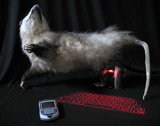 Text-O-Possum = Exactly What You Think