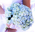 Flowers 101: Hydrangeas