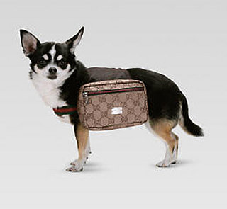 Gucci Pet Backpack: Spoiled Sweet or Spoiled Rotten?