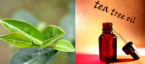 BellaSugar's Guide To Tea Tree Oil Products