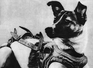 Ten dogs that changed the world