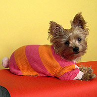 Latest Fashion Trends for Dogs