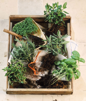 Do You Have an Herb Garden?