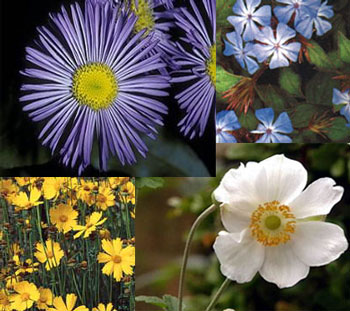 Planting Perennials For Your Fall Garden