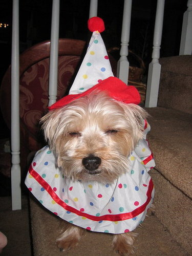 Frankie Tries on a Halloween Costume