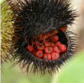 Annatto:  It&#039;s in My Food, But What is it?