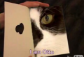 Otto the Cat Is Looking For Love in All the Wrong Places