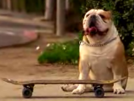 A Bulldog With Skateboard Skillz