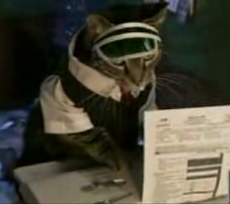 It's Tax Time!  Here's The Purrrfect Solution.