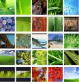 Download of the Day: Vista Wallpapers